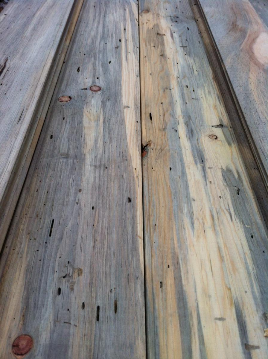 Gallery Beetle Kill Blue Pine Hardwood Floor Refinishing Evergreen